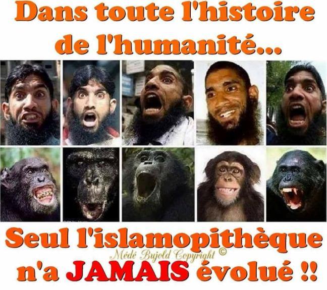 islamopitheque